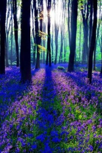 Magic 3D Forest